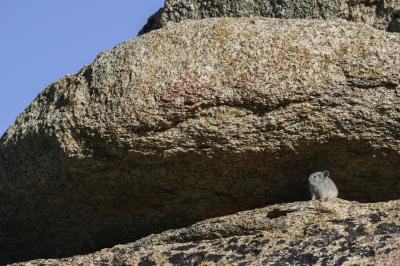 動物を探してアルタピークの頂上へ