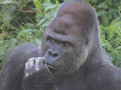 科学と動物を学ぶ!名古屋市内1日観光!