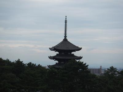 奈良公園周辺の観光【8年ぶりの奈良旅行(その2)】