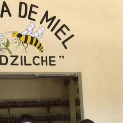 ハチミツは万能薬♪
