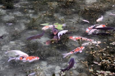 ■ 名もなき池(通称:モネの池)に行ってきました  <岐阜県>