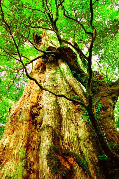 ★「苔の森」屋久島へ 島内1周観光編★