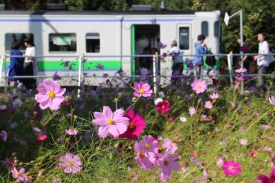 札幌から滝川経由新十津川、札沼線廃止予定区間に乗車する。コスモスに実りの秋・・・ゆく秋を惜しむ。