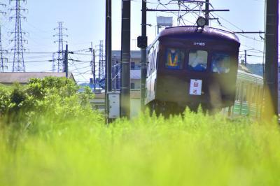 伊豆箱根鉄道大雄山線を走る旧型車両と沿線に広がる実りある秋の風景を探しに訪れてみた