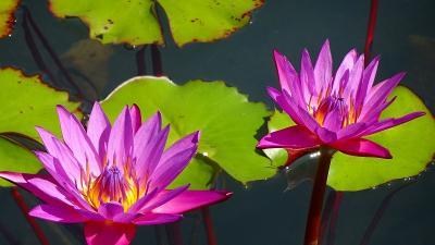 万博公園へ彼岸花を見に出掛けました 中巻。