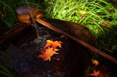 京都・嵯峨野のお気に入りの源光庵、祇王寺、二尊院へ秋の散策
