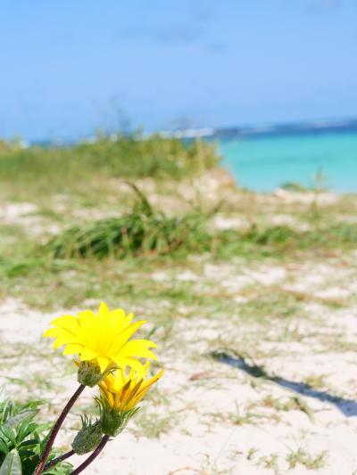 ワイルドフラワー咲く西オーストラリア9日間 その1(SQビジネスで出発、セルバンテスへ)