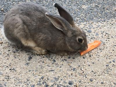 広島日帰り ウサギの島