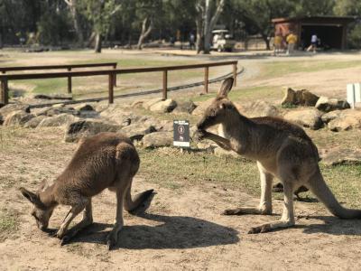 オーストラリア家族旅行2019夏①ゴールドコーストへ