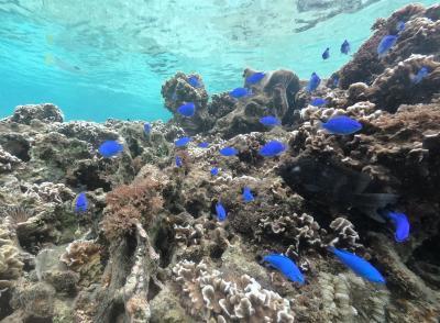 沖縄家族旅行5日間 Real Blueを探す旅-1- 事前準備~1日目