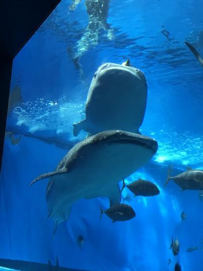 美ら海水族館でぼんやり
