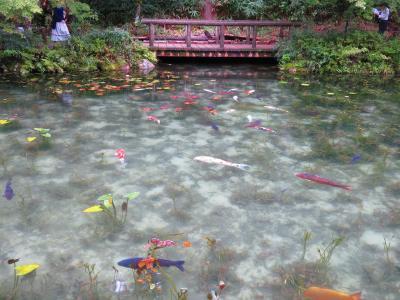 2019帰省 2日目-1:SNSで観光地化した『名もなき池』モネの池に行ってみた