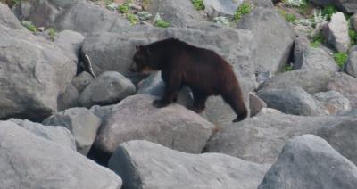 夏のウトロに熊がいた。海の幸も食べまくった。45分のJAL新千歳/女満別 搭乗記