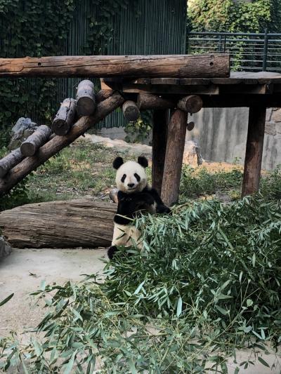 3泊4日 北京旅行 3日目~北京動物園でパンダと市内名所巡り~