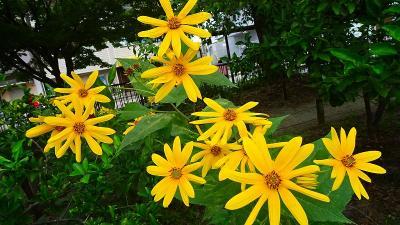 笹原公園 20日後のお花達 その8。