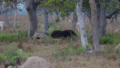 北パンタナール3カ所目のPiuval Lodgeは広大な敷地内で動物、野鳥天国! 大アリクイ発見!Vol.1