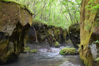 樽前ガローの幻想的な世界2019夏~苔に覆われた岩壁の溪谷~(苫小牧)