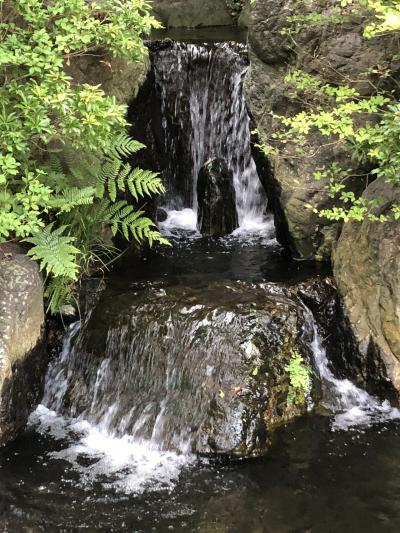 寒川神社へ 祈祷を受けた人のみ入場可能な神域の神嶽山素晴らしかった神苑