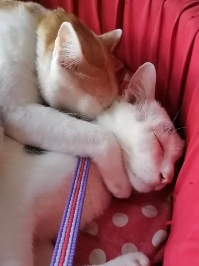 チェンマイ 猫好きへおすすめゲストハウス