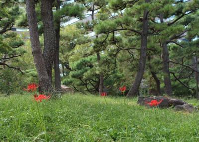 日比谷公園で曼珠沙華探し♪