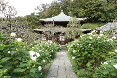 鎌倉瑞泉寺-2019年秋