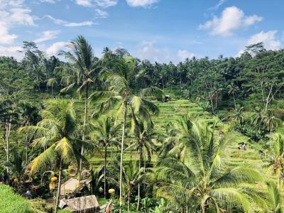 2019GW*Bali旅行②*ウブド観光~ライステラスやティルタウンプル寺院へ♪