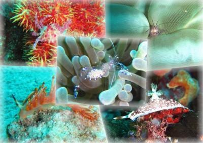 9月のセブで楽しくダイビング!2日目はのんびりマクロ生物探しです!