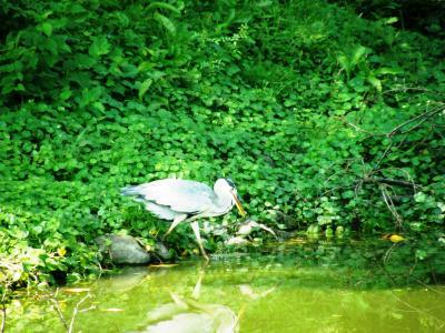 権現堂のヒガンバナが見頃に・・・2-自然いっぱいの権現堂公園散策
