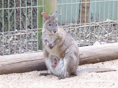 南半球初訪問☆オーストラリアの大自然&もふもふに癒される旅③シドニー2日目