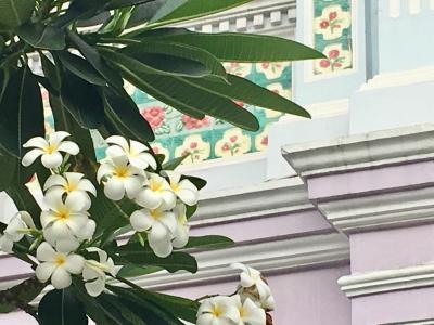 アラ還姉妹のシンガポールMBSにステイ②   ベタな街歩き・前編