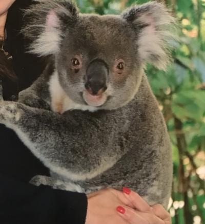 オーストラリア家族旅行2019夏 ③ 定番コアラ抱っこ