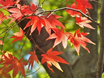 神戸市立森林植物園に小さな秋を見つけた!