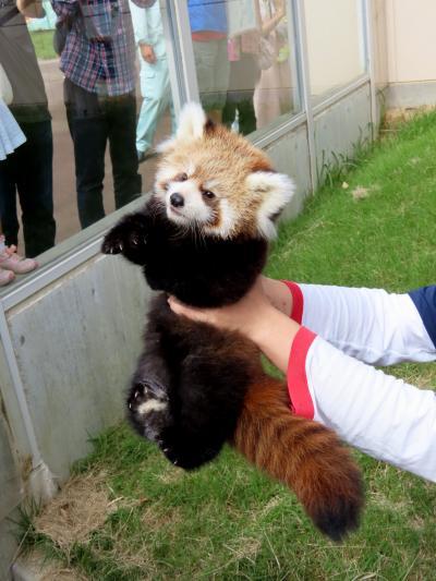 福知山市動物園 よろしく!!キュートでクールな令明君!! 前回同様・・・相変わらずのドタバタお披露目会となりました(苦笑)