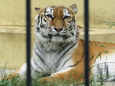 北海道・東北動物園めぐり⑤【釧路市動物園】