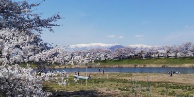 宮城 白石川堤一目千本桜 🌸一泊二日