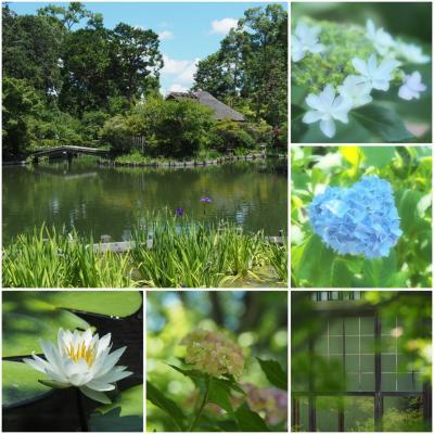 6月半ば☆あさっての天気予報は…晴れ?ならば京都に行っちゃおう♪〈3〉光の中の紫陽花