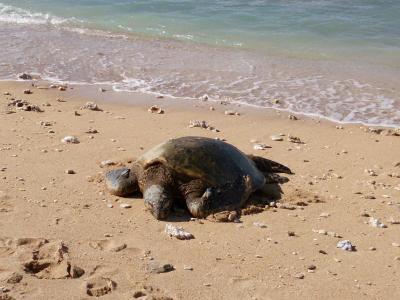 マウイ島での珍しい光景10選