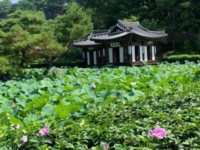 ソウル&江陵 4泊5日の旅