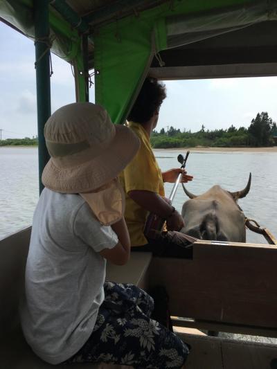 夏旅2 由布島でまったり水牛とお散歩
