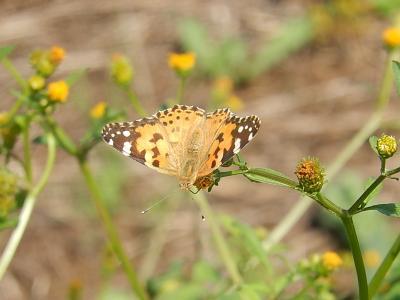 所沢市南永井付近の風景・・蝶を観察する