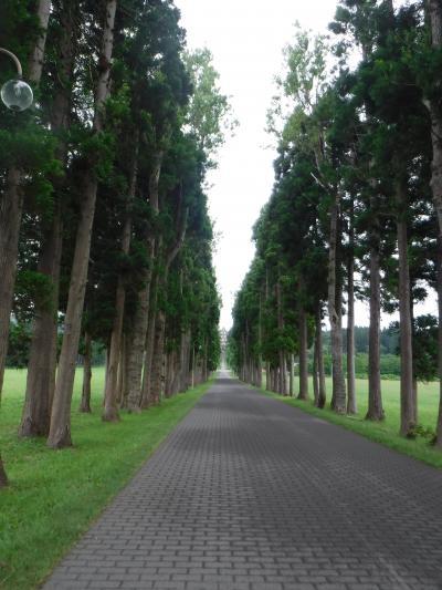 ダイヤモンドプリンセスで夏の北海道へGO☆⑥函館タクシー旅-前編