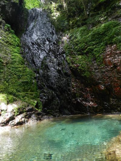 古座川町の『ハリオの滝』でアカハライモリに出逢う!◆2017年6月/南紀で滝めぐり《その2》