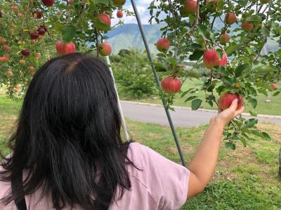 上山田温泉でサイクリング その2 途中でリンゴ狩り。