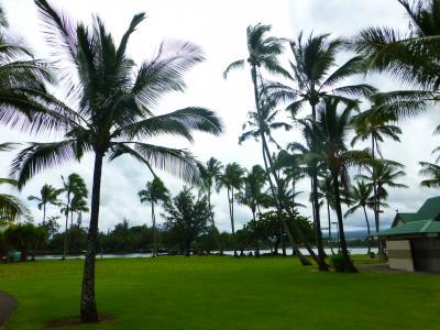 ハワイ島2019