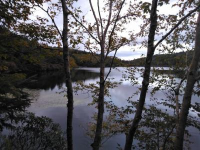紅葉にはちょっと早かった 白駒の池