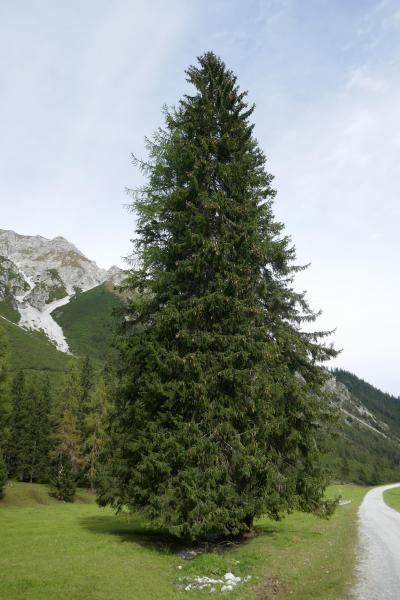 2019年ドイツ&オーストリアハイキングー12 氷河見学・インスブルック&最後のシュリック2000山歩き