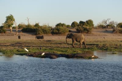 南アフリカ航空で、カサネへ、サンセットボートクルーズ、個人手配の気まま旅行