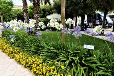 魅惑のシチリア×プーリア♪ Vol.722 ☆オートラント:花がいっぱいのドンノ広場♪