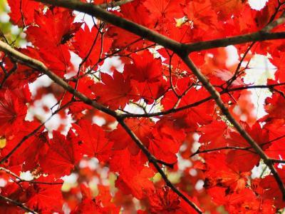 晩秋の候 秋をさがしに オジ散歩
