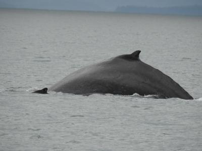自然と野生動物とグルメ!アラスカクルーズ8日間(ノルウェージャン・ジュエル)③